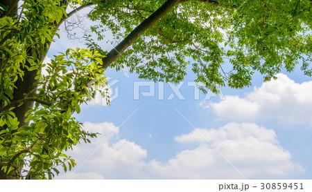 新緑の木と青空と雲 30859451