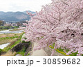 賀茂川の春 30859682