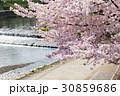 賀茂川の春 30859686