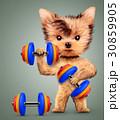 ダンベル わんこ 犬のイラスト 30859905