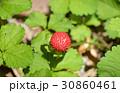 ヘビイチゴ 実 果実の写真 30860461