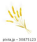 小麦 束 30875123