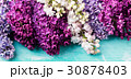 Bunch of lilac flowers on a turquoise background 30878403