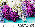 Bunch of lilac flowers on a turquoise background 30878405
