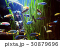 fishes 30879696