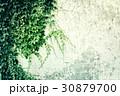 ivy wall 30879700