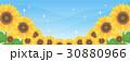 青空 夏 ひまわりのイラスト 30880966