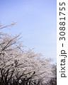 青空とソメイヨシノ 30881755
