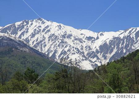 白馬岳 代かき馬の雪形 30882621