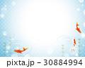 金魚 水 魚のイラスト 30884994