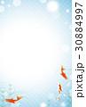 金魚 魚 コピースペースのイラスト 30884997