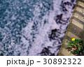 たんぽぽ 30892322