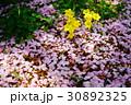 オオキバナカタバミと桜の花びら 30892325