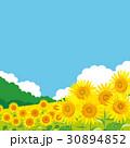 ひまわり 風景イラスト 30894852