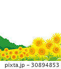 ひまわり 向日葵 夏のイラスト 30894853