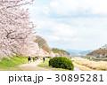 賀茂川の春 30895281