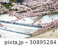 賀茂川の春 30895284