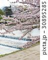 賀茂川の春 30895285