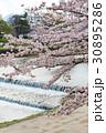 賀茂川の春 30895286