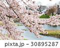 賀茂川の春 30895287