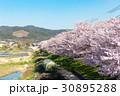 賀茂川の春 30895288