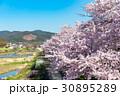 賀茂川の春 30895289