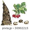 水彩画 野菜 椎茸のイラスト 30902215