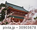桜みくじ 神社 京都の写真 30903678