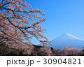 富士山 桜 染井吉野の写真 30904821