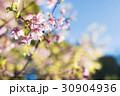 葉桜  30904936