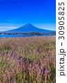 ラベンダー 富士山 満開の写真 30905825