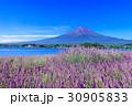 ラベンダー 富士山 満開の写真 30905833