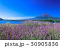 ラベンダー 富士山 満開の写真 30905836