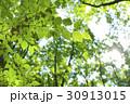 森林 葉 太陽の写真 30913015