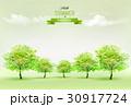 樹木 樹 ツリーのイラスト 30917724