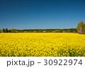 旅、東北下北半島、絶景、満開の菜の花と桜 30922974