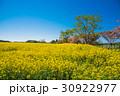 旅、東北下北半島、絶景、満開の菜の花と桜 30922977