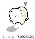 歯 30923323