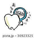 歯 30923325