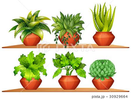 Different types of plants in potsのイラスト素材 [30929664] - PIXTA