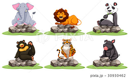 different types of wild animals on rocksのイラスト素材 30930462