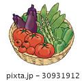 野菜 夏野菜 食材のイラスト 30931912