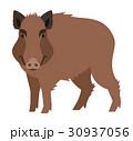 野生 イノシシ 猪のイラスト 30937056