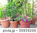 玄関先に飾った鉢植えの植物 30939200