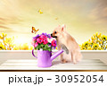 Story of spring 009 30952054