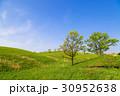 高原 初夏 新緑の写真 30952638