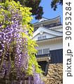 4月愛知 岡崎城・天守閣と藤棚 30953284
