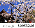 3月京都 平野神社・神門と魁桜 30953286