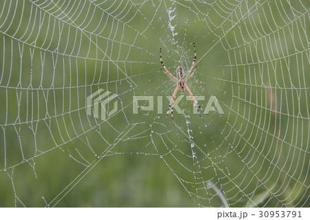 蜘蛛2 30953791