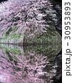 4月滋賀 彦根城 石垣 ライトアップ 桜 30953893